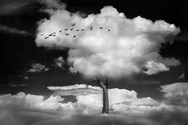 Nous avons tous un arbre qui nous ressemble ! de Maria Hirsch - Photo Club de Martigues