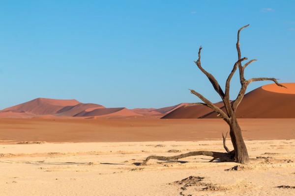 Dixième photo ex aequo - Le vieux déseDixième photo ex aequo - Le vieux désert de Nicole Chassignol - Fos Provence Photographie