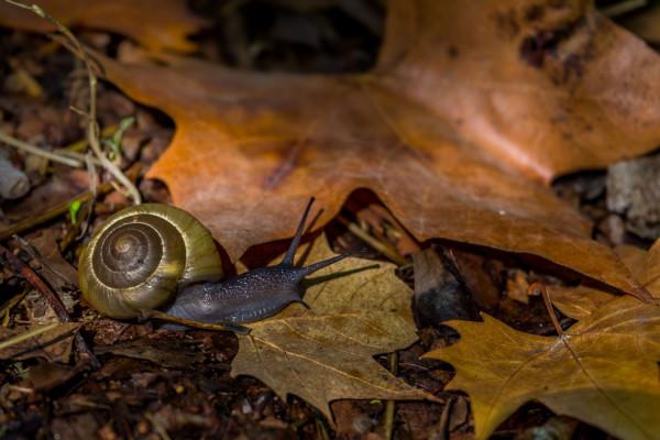 Escargot d'automne Emilie Brun - Photo Club M.P.T. Vitrolles