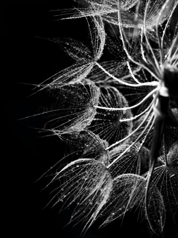 En négatif de Karine Albert - Photo Club Mouansois