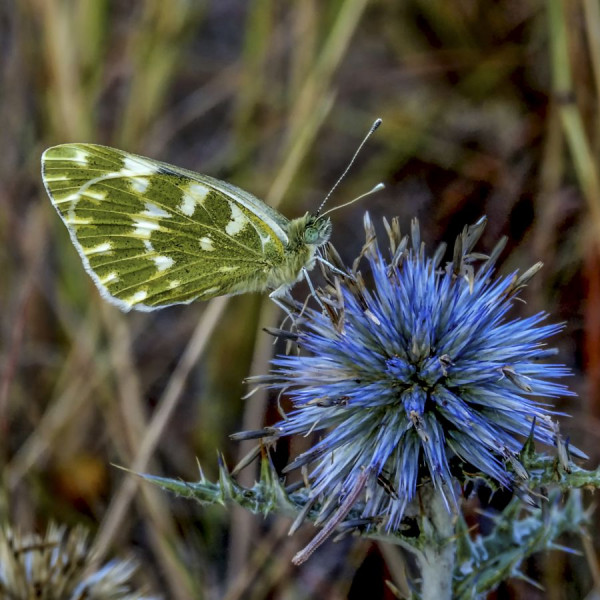 Vert et bleu de Marie-Thérèse Caillo t- Photo Club de La Crau