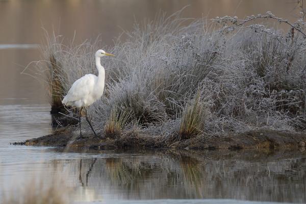 Petit matin d'hiver sur les étangs de Mazères - Michel Rougnaux - Photo Club Toucassin