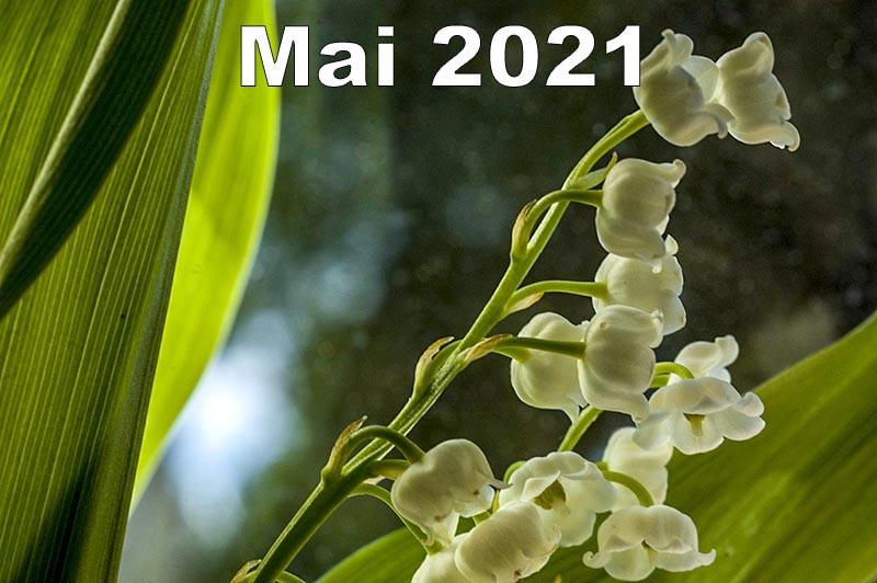 3 auteurs par mois - Mai 2021